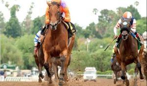 Watch Horse Racing Live Online